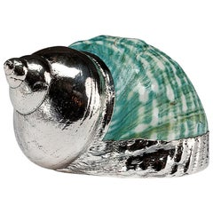 Partially Silvered Sea Shell Turbo Green and White