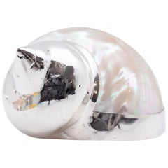 Partially Silvered Sea Shell Turbo Mother of Pearl