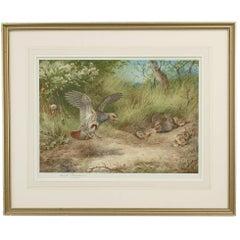Partridge, Spring, Print by Archibald Thorburn