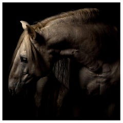 """""""Patience"""" Framed Color Horse Photo by Lisa Houlgrave"""