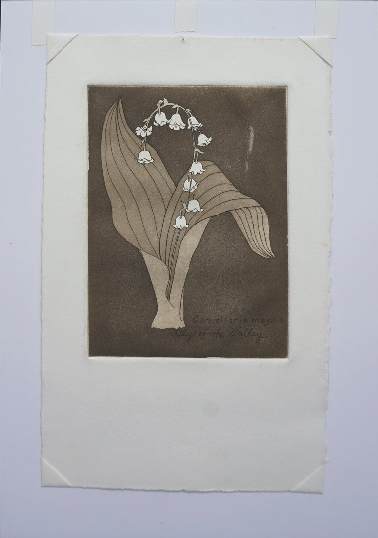 Delicate lithograph of Lily of the Valley (Convallaria majoralis) by Patricia Pearce (American, b. 1948). This piece is unsigned, but was acquired with a collection of other Pearce work. Presented in a new cream mat with foam-core backing. Image
