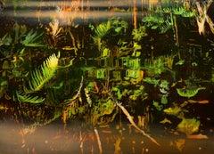 Amazonas II 51 X 31