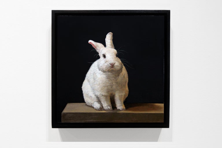 Hybrid Rabbit For Sale 1