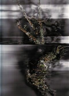Poussières de forêt (Révélations) 1