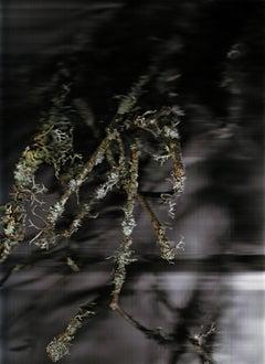 Poussières de forêt (Révélations) 2