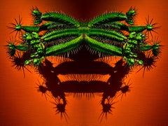 Pincushion Euphorbia