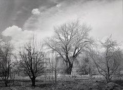 PAUL CAPONIGRO. Trees Taos, NM, 1976