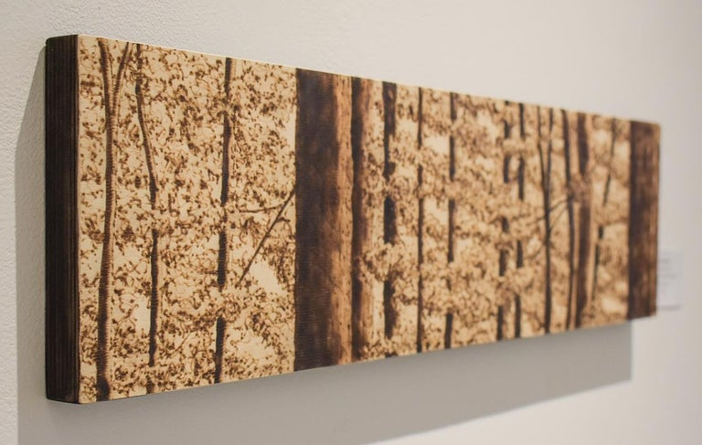 In the Canopy (Intricate Burned and Scorched Forest Landscape on Birch Wood) For Sale 1