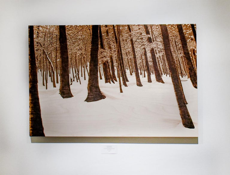 Hemlocks (Snowy Forest Landscape on Birch Wood Made with a Blowtorch) - Painting by Paul Chojnowski