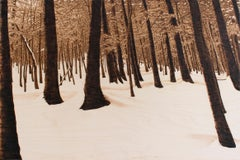 Hemlocks (Snowy Forest Landscape on Birch Wood Made with a Blowtorch)