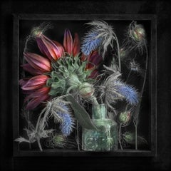 Motion Without Gesture IV: Limited Edition Still Life Photograph by Paul Knight
