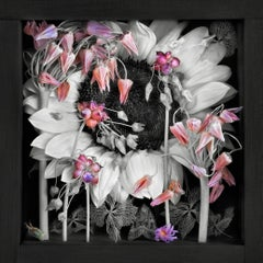 Motion Without Gesture V: Limited Edition Still Life Photograph by Paul Knight
