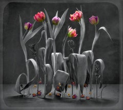 Stage Whispers (Tulips): Limited Edition Still Life Photograph by Paul Knight