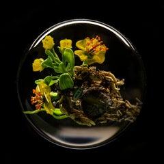 Paul Stankard Glass Paperweight Fine Art Tulips Daffodils Mosaic - Signed S 11