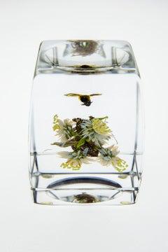 Paul Stankard H 46 Botanical Honey Bee w/human form — handmade glass paperweight