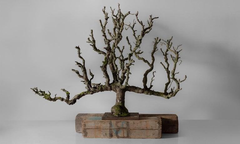 Beautiful form with original lichen.
