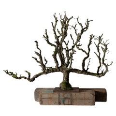 Pear Tree Espalier Sculpture