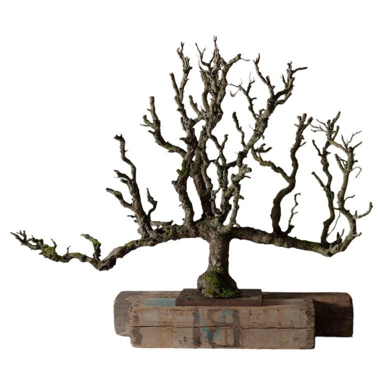 Pear Tree Espalier Sculpture For Sale