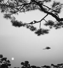 Seoul, Korea (Three Birds)