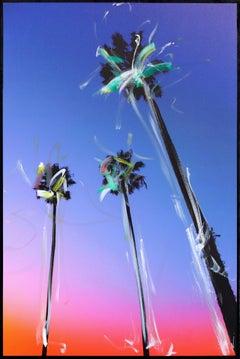Santa Barbara 3 Palms