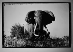 Elephant, circa 1960s by Peter Beard, signed later print 1990s