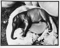Elephant's Embryo, Uganda
