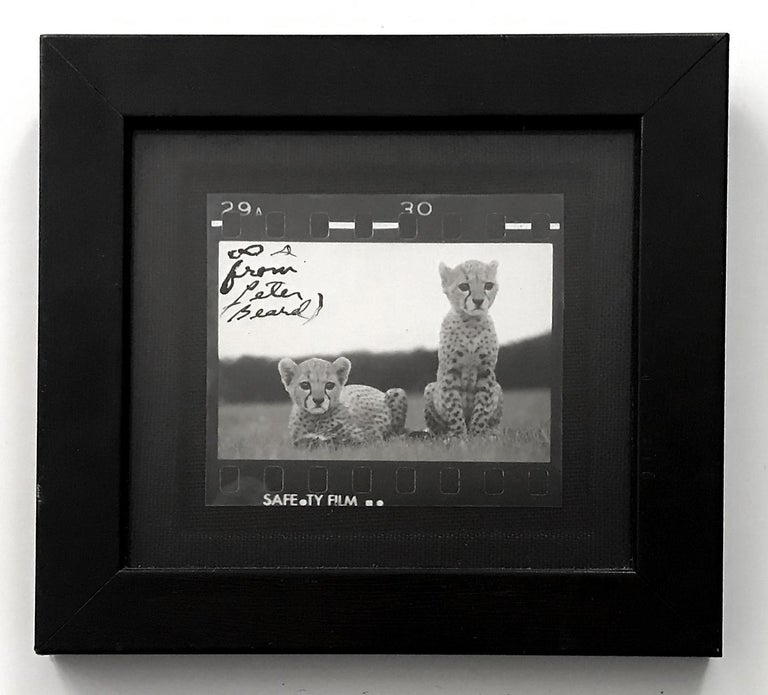 Peter Beard Black and White Photograph - Orphaned Cheetah Cubs, Photography, Silver Gelatin, Signed, Framed