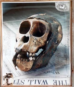 Rwanda Skull After the Genocide of the Mountain Gorillas in Africa Photograph
