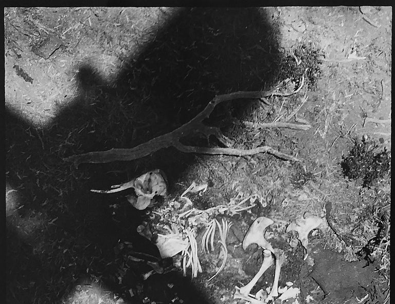 The Death of Elephants in Tsavo Park - Gray Black and White Photograph by Peter Beard