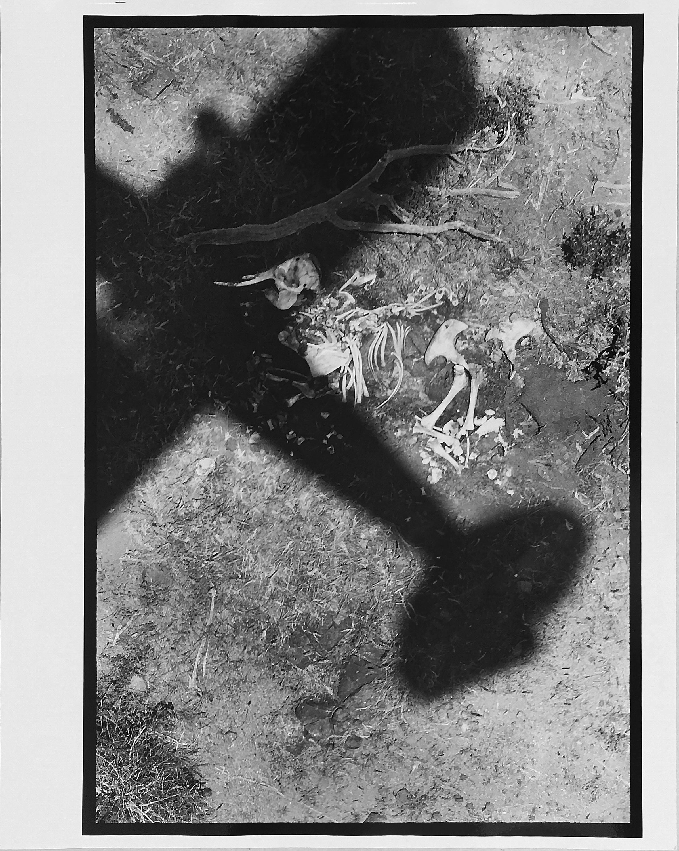 Peter Beard - The Death of Elephants in Tsavo Park, Platinum Print/Unsigned