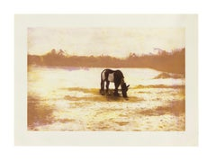 Peter Doig, Pinto, etching, signed, 2000