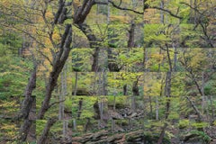 """""""Forest, Kaaterskill, New York X 36"""" - Composite Image Photography - Cubism"""
