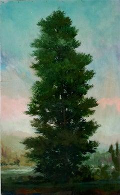 Spruce