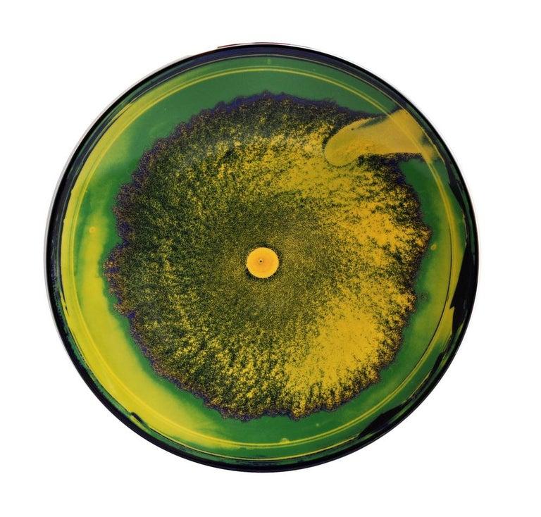 French Petri Dish Set by Vik Muniz For Sale