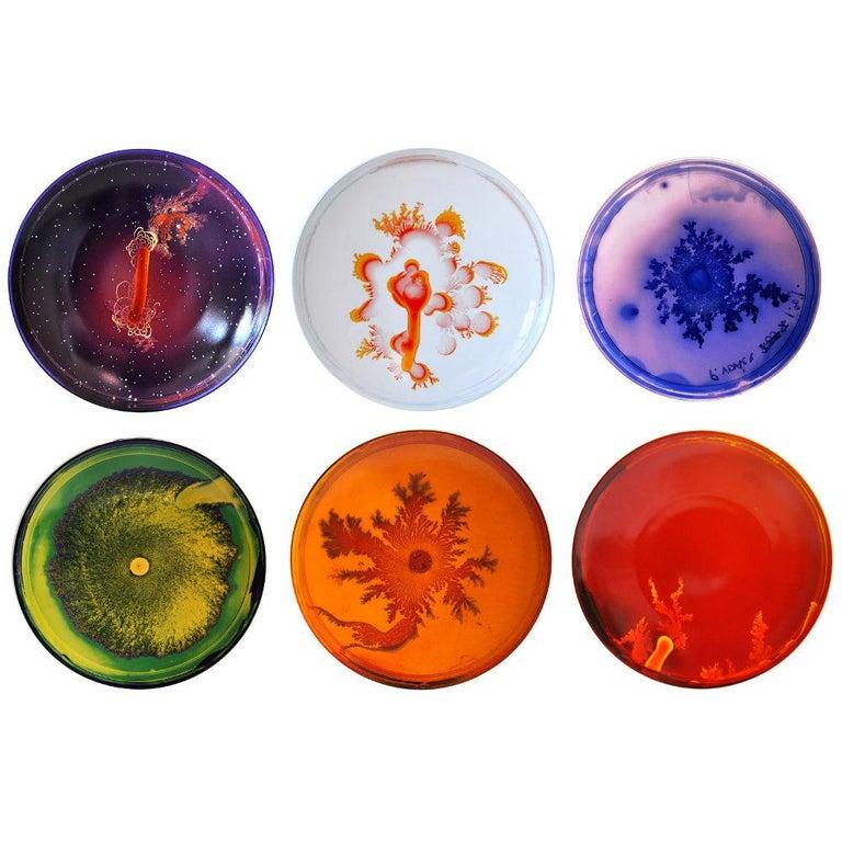 Petri Dish Set by Vik Muniz For Sale