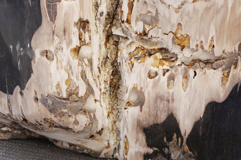 Petrified Wood n°D Side Table For Sale 1