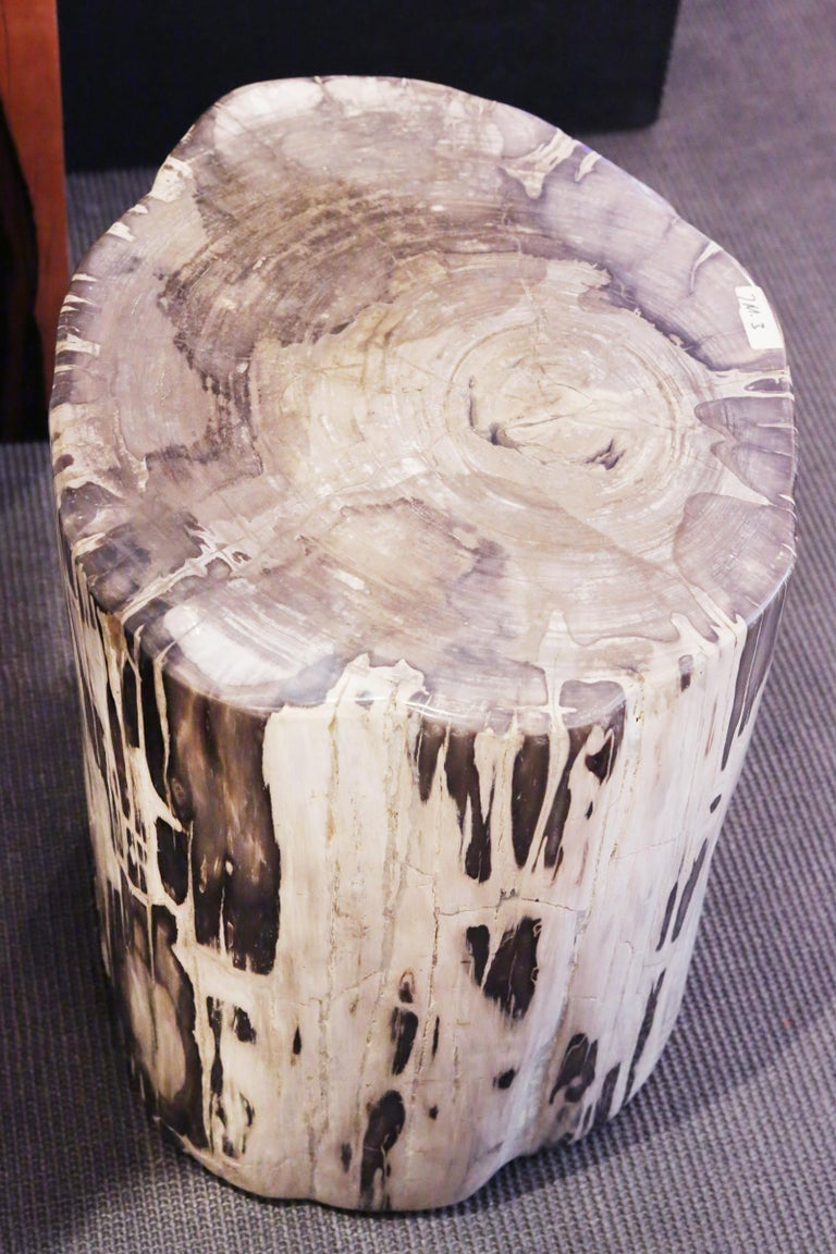 Petrified Wood Set of 2 n°B Side Table For Sale 4