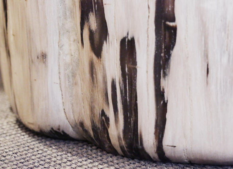 Petrified Wood Set of 2 n°B Side Table For Sale 8