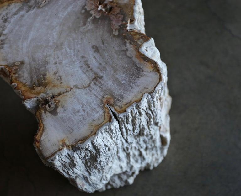 Petrified Wood Side Table 8