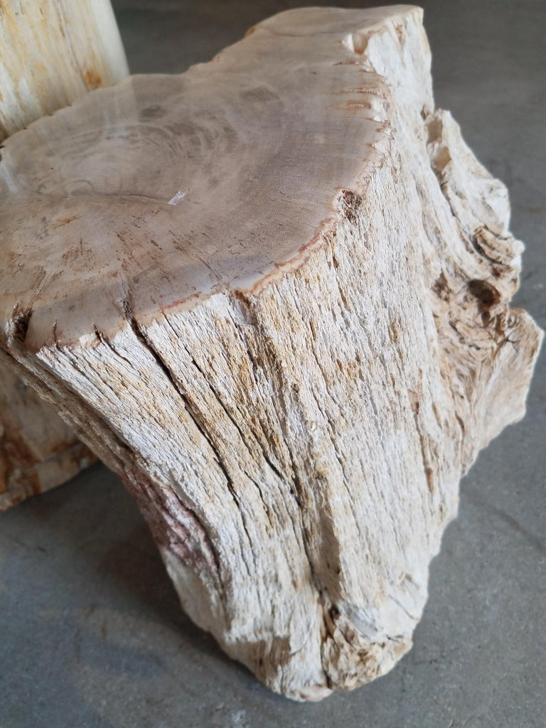 Petrified Wood Side Table In Excellent Condition For Sale In Cardiff, CA