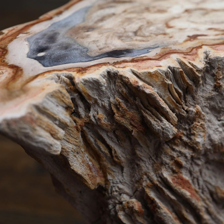 Polished Petrified Wood Side Table For Sale