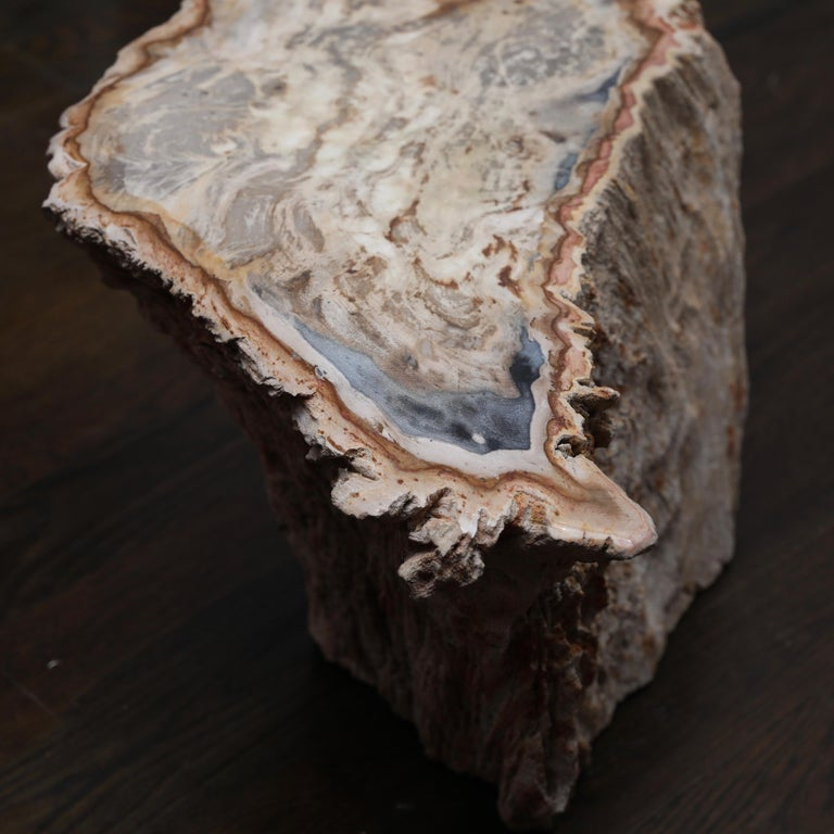 Petrified Wood Side Table For Sale 1