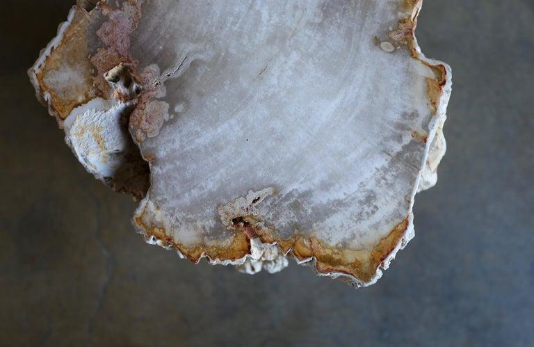 Petrified Wood Side Table 3
