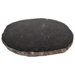 Petrified Wood Slice Charger