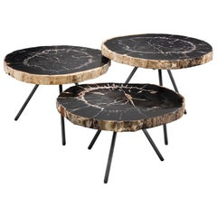 Petrified Wood Slices Set of Three Coffee Table