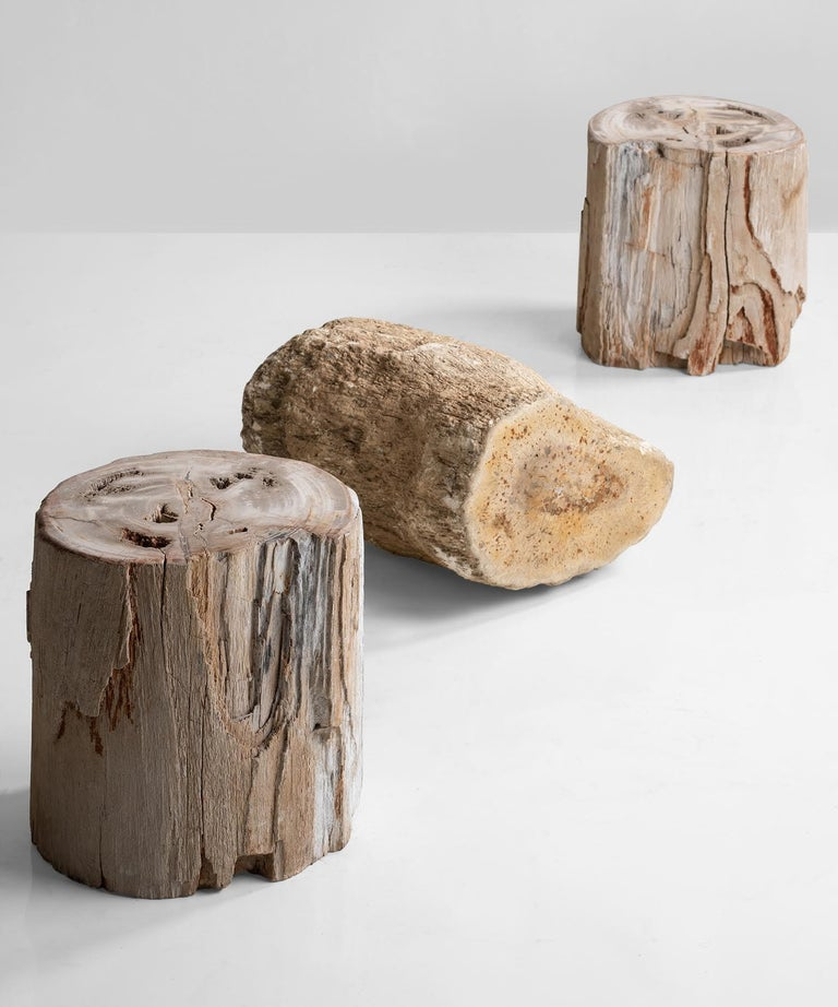 Petrified wood stands, America, 19th century  3 unique pieces of petrified wood. Perfect for side tables.