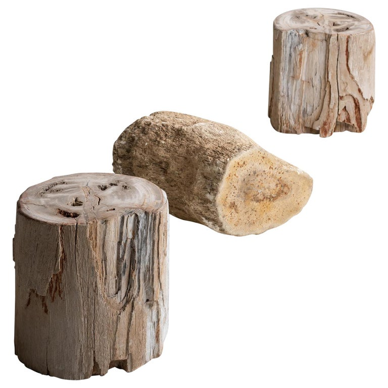 Petrified Wood Stands, America, 19th Century For Sale