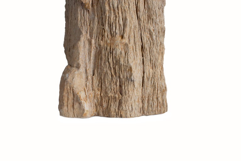 Mid-Century Modern Petrified Wood Table Lamp For Sale