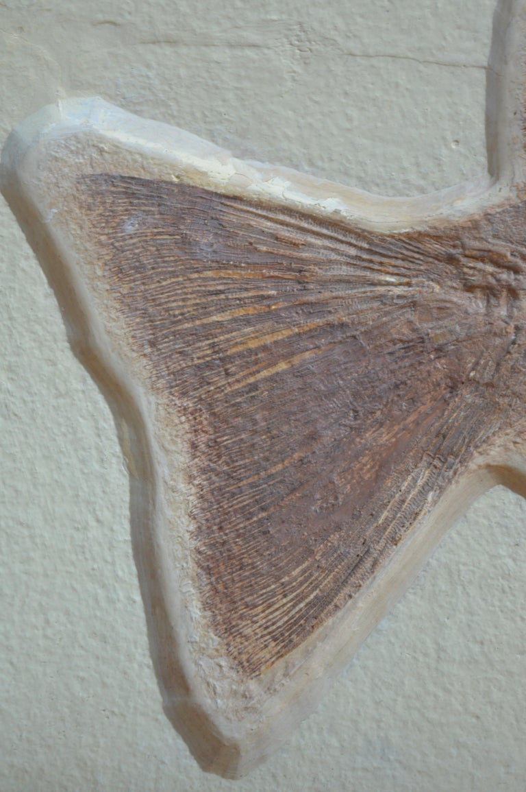 18th Century and Earlier Phareodus Fish Fossil from Eocene Era on Limestone For Sale