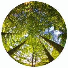 SUMMER TREES - CONTEMPORARY PHOTO - COLOUR PHOTO - FISHEYE - NATURE - TREES